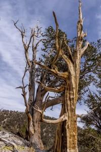 עצים מחובקים